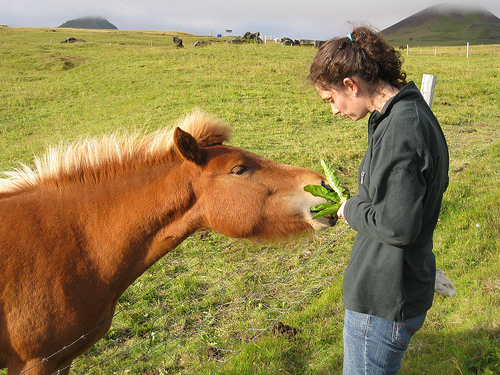 7 Things To Consider When Feeding A Pony