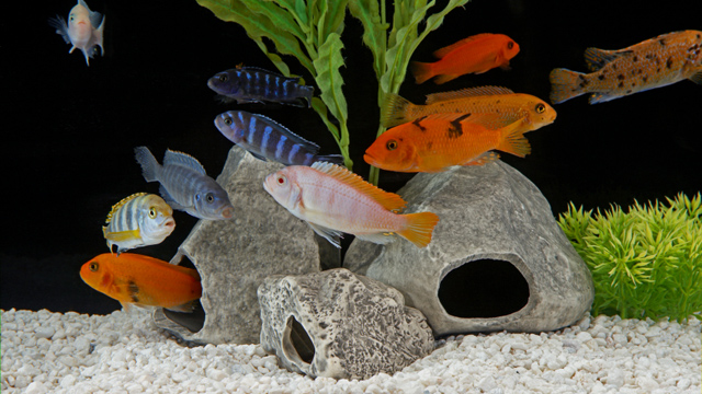 Adding To The Basics Aquarium Beauty Tips