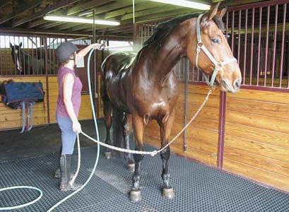 Rubber Mats For Horse Stable