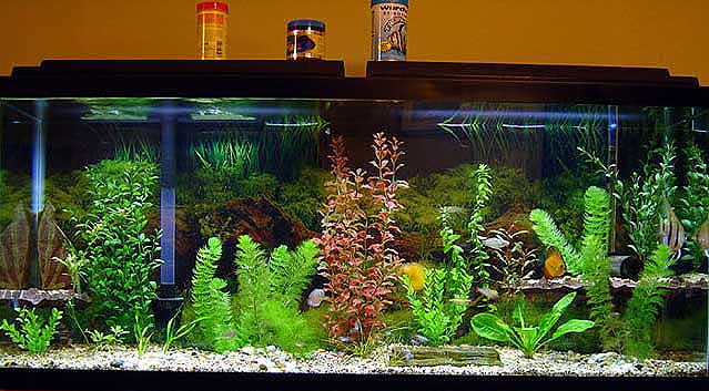 Tips To Start And Maintain A Healthy Aquarium