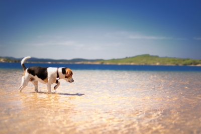 UK Pet Friendly Holiday Destinations