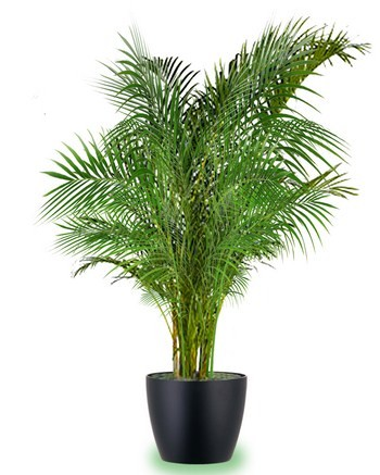 Best Oxygen Producing Trees You Can Grow In Your Home