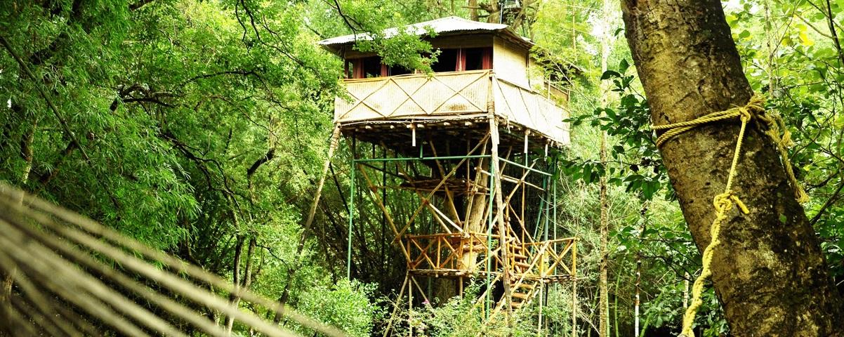 Vacationing In Masinagudi - Mudumalai National Park, Bamboo Banks and Gopalaswami Betta