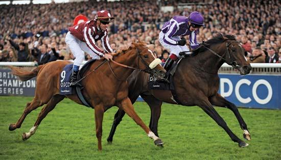Amazing Power Of Horse Racing At Worldwide