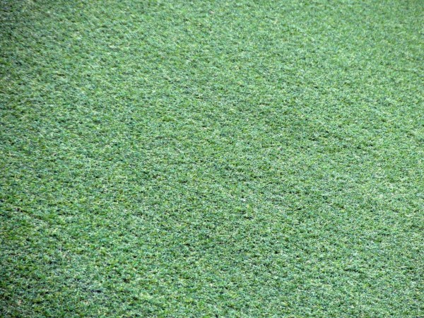 Is Your Artificial Grass Healthy?