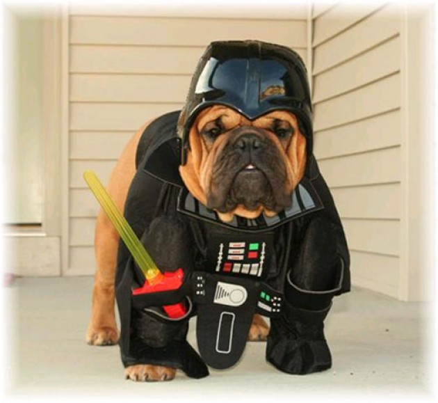 When Your Pug Looks Like Darth Vader
