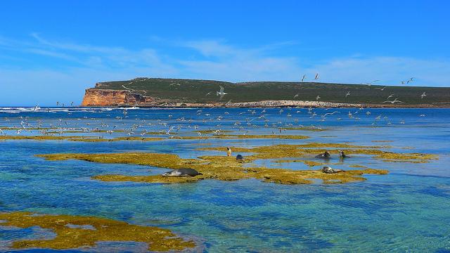 Top Australian Diving Spots