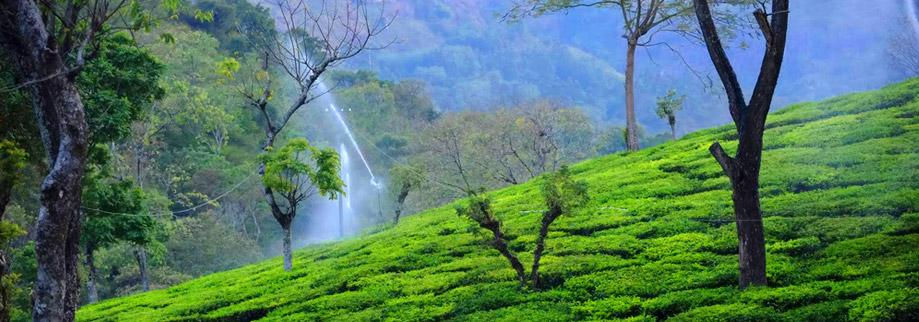 Top 5 Sites In Kodaikanal That You Must Visit