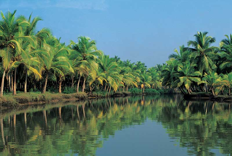 Where To Buy The Perfect Fish In Kerala?