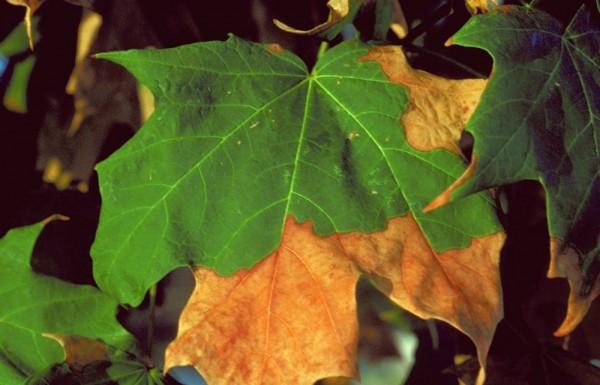 Drought Stress & Tree Health