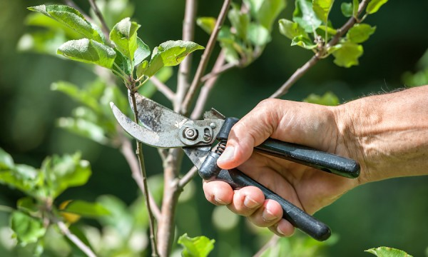 How Tree Surgeons Harrow Maintain Health Of Trees