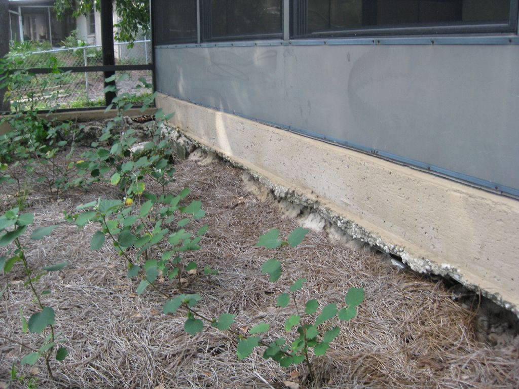 4 Prophylactic Measures To Protect Your Foundation From Soil Erosion