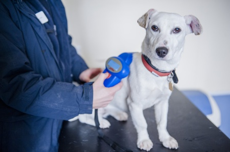 Why You Need To Microchip Your Pet