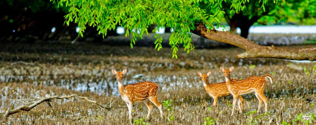 Sundarban Tour- Best Destination Spot For The Nature Lovers