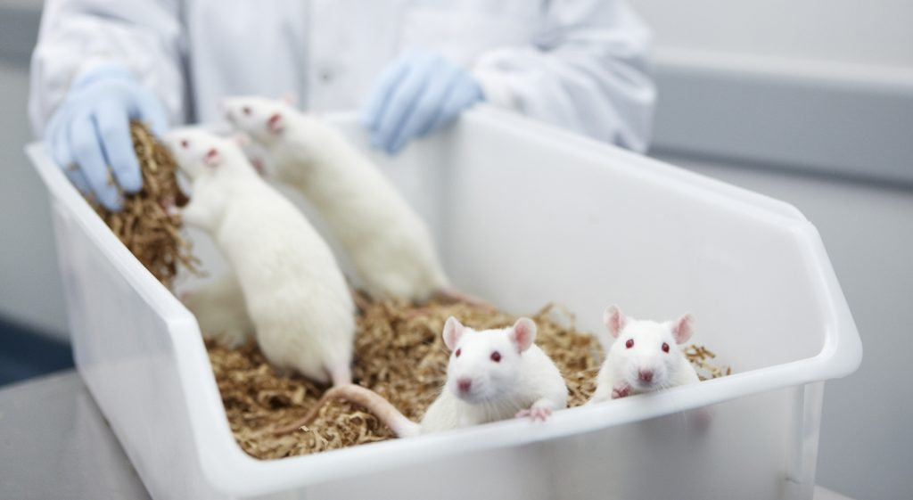 Ethics Of Animal Testing