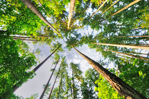 Trees That Best Benefit The Environment
