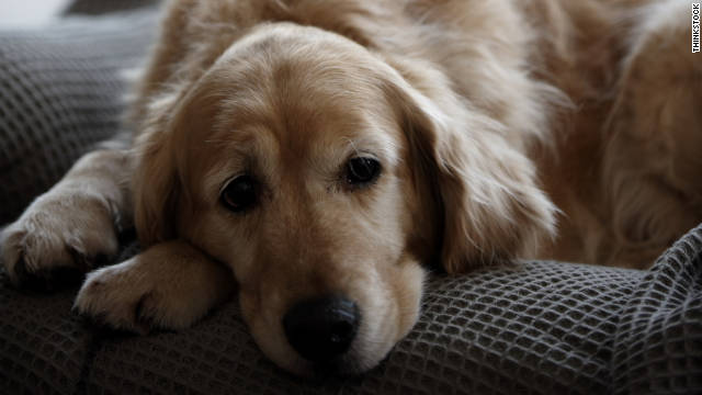 The Shocking Loss Of A Pet