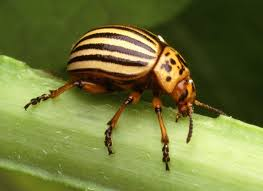 4 Simple Ways To Get Rid Of Pests