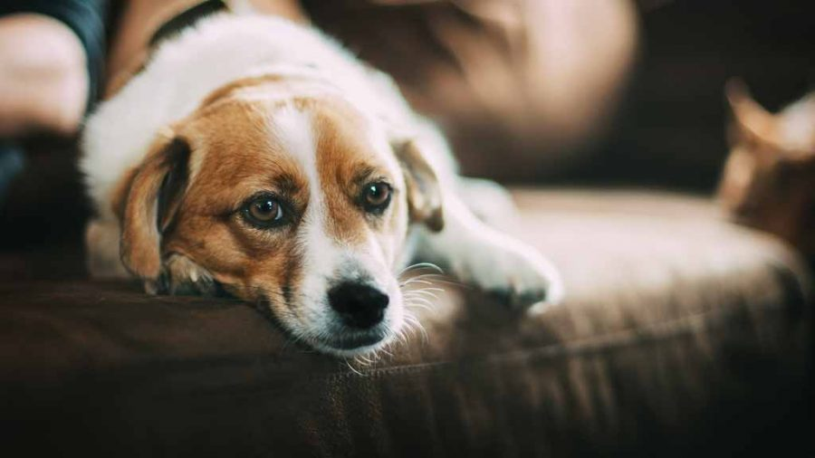 7 Simple Ways To Honor Your Deceased Pet's Memory