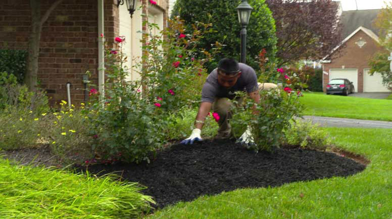 Mulching Tips From Brendan Wetzel To Enhance The Quality Of The Green Patch
