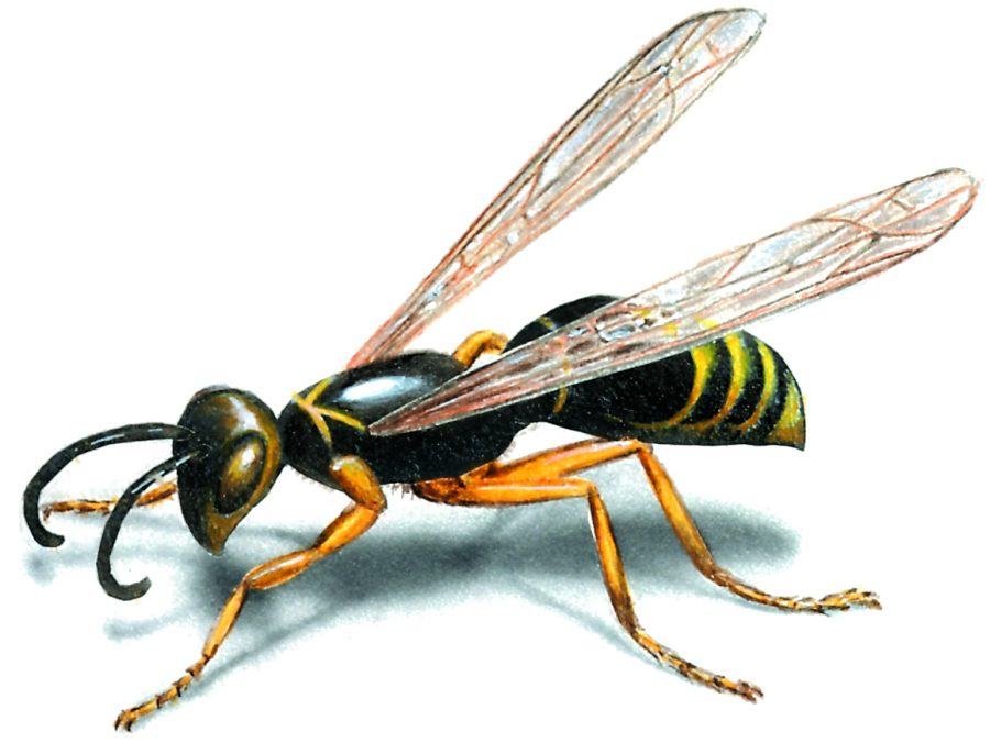 Why Professional Wasp Removal Is Beneficial